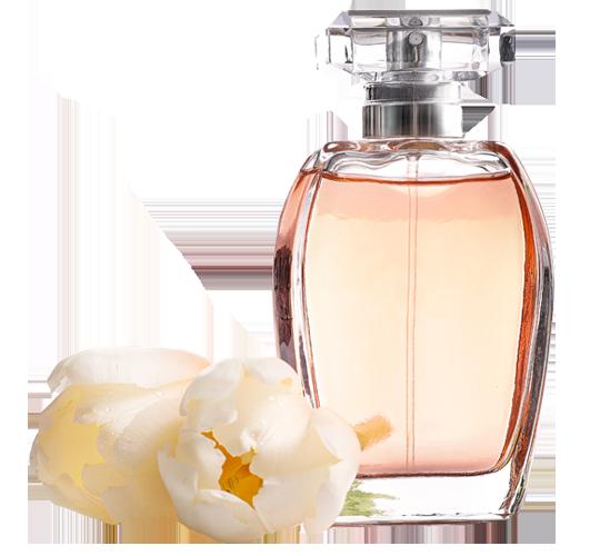 Zoom-sur-les-parfums
